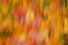 Herbstliche Blätterfarben 1