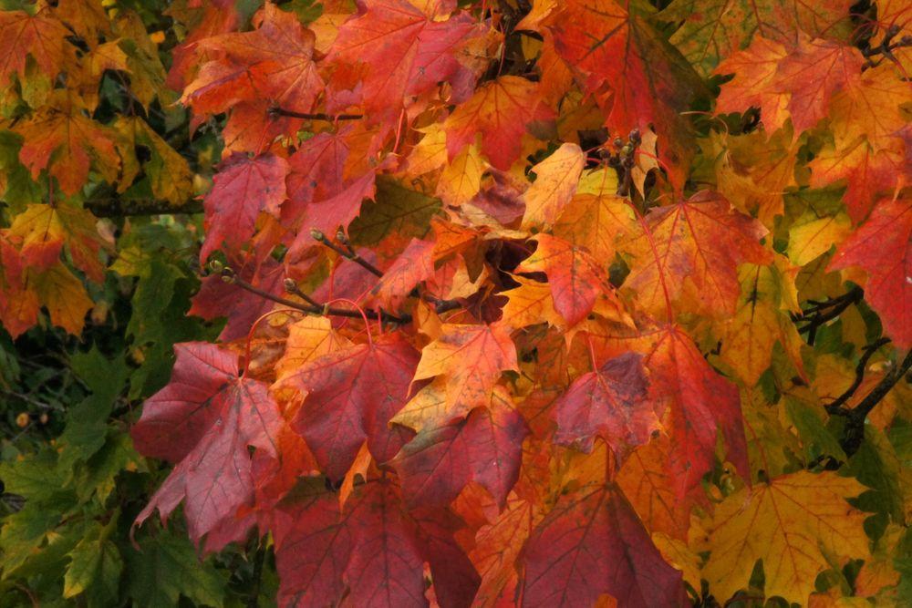 Herbstliche Blätterfarben 3