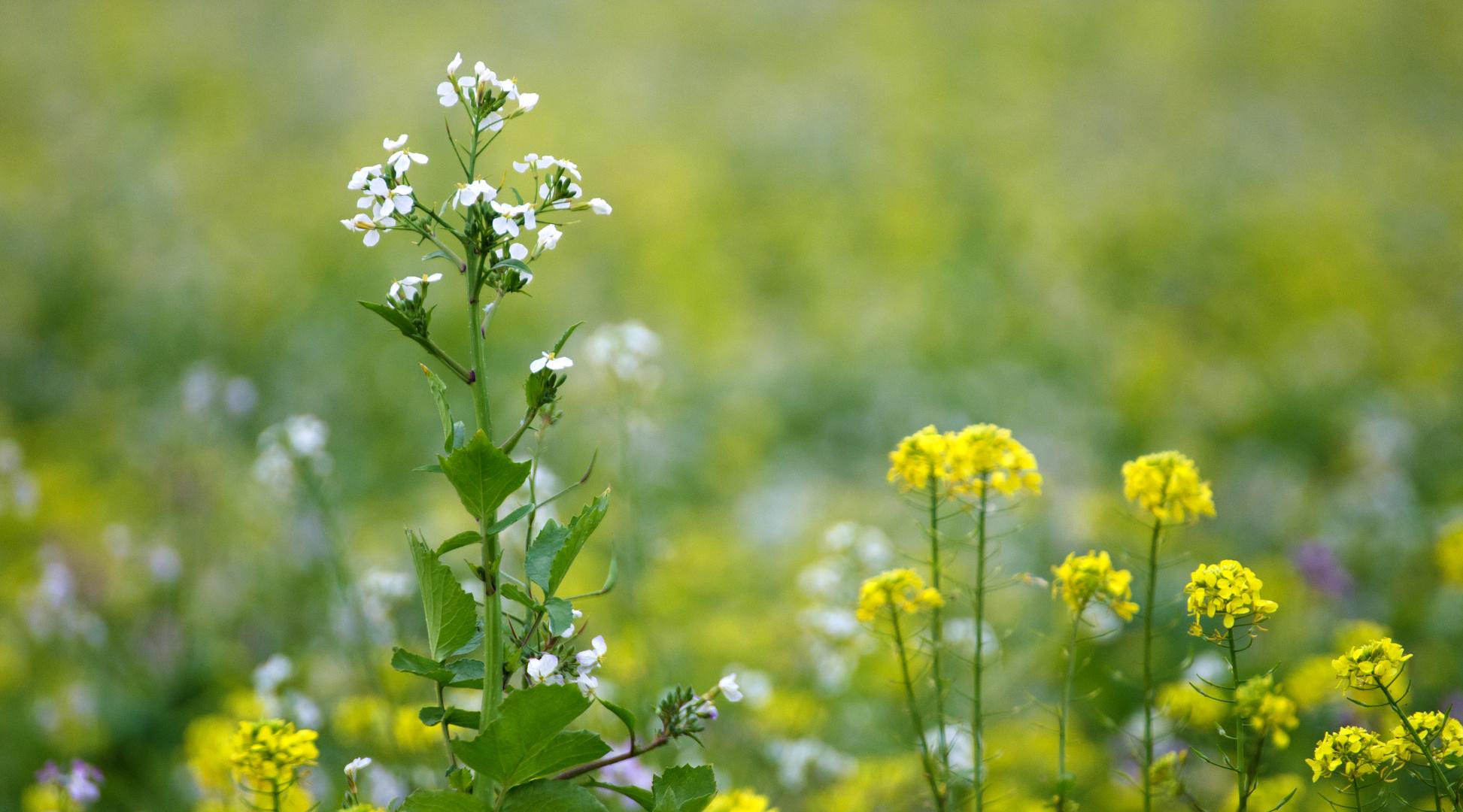 herbstliche Blumenwiese