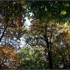 Herbstliche Dächer