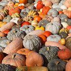 Herbstliche Ernte