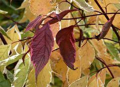 Herbstliche Farblehre