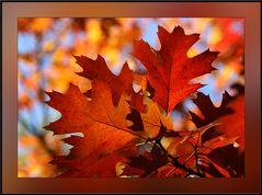 Herbstliche Glut