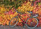 Herbstliche Harmonie