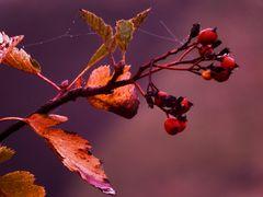 Herbstliche Impression