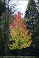 * Herbstliche Impressionen *