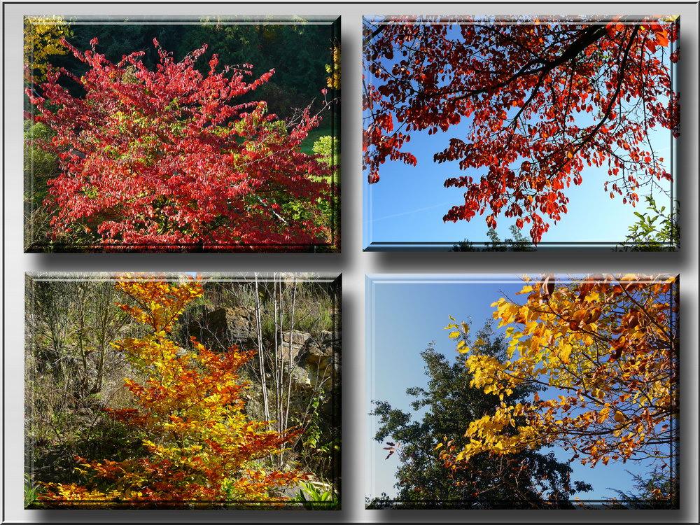 Herbstliche Impressionen 2