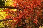 Herbstliche Impressionen aus Oberbozen/It 2