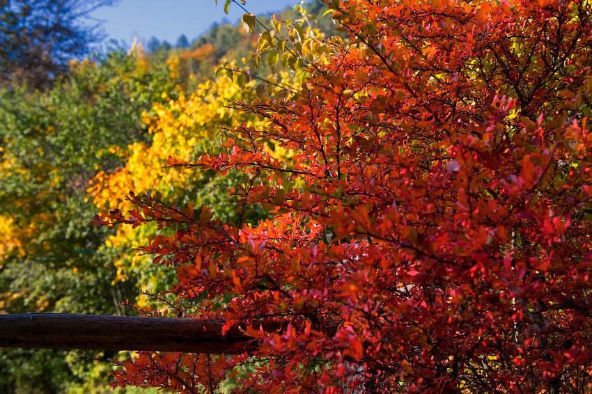 Herbstliche Impressionen aus Oberbozen/It