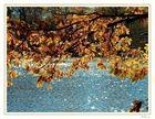 ::::: Herbstliche Lichtspiele :::::