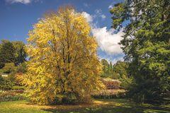 Herbstliche Mainau