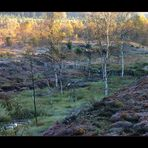 """Herbstliche Moor-Schönheit... (4. der Serie  """"Mecklenbruch"""")"""