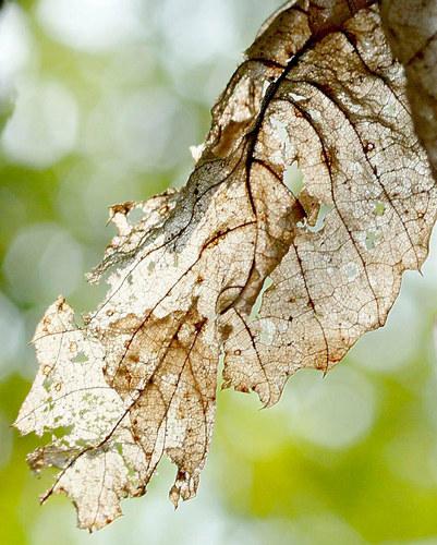 Herbstliche Morbidität