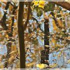 Herbstliche Natur im Wasser