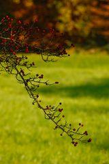 Herbstliche Natur zeigt stolz ihre Insignien