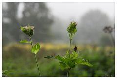 Herbstliche Nebelstimmung
