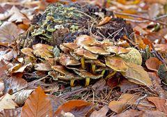 Herbstliche Pilzfamilie III