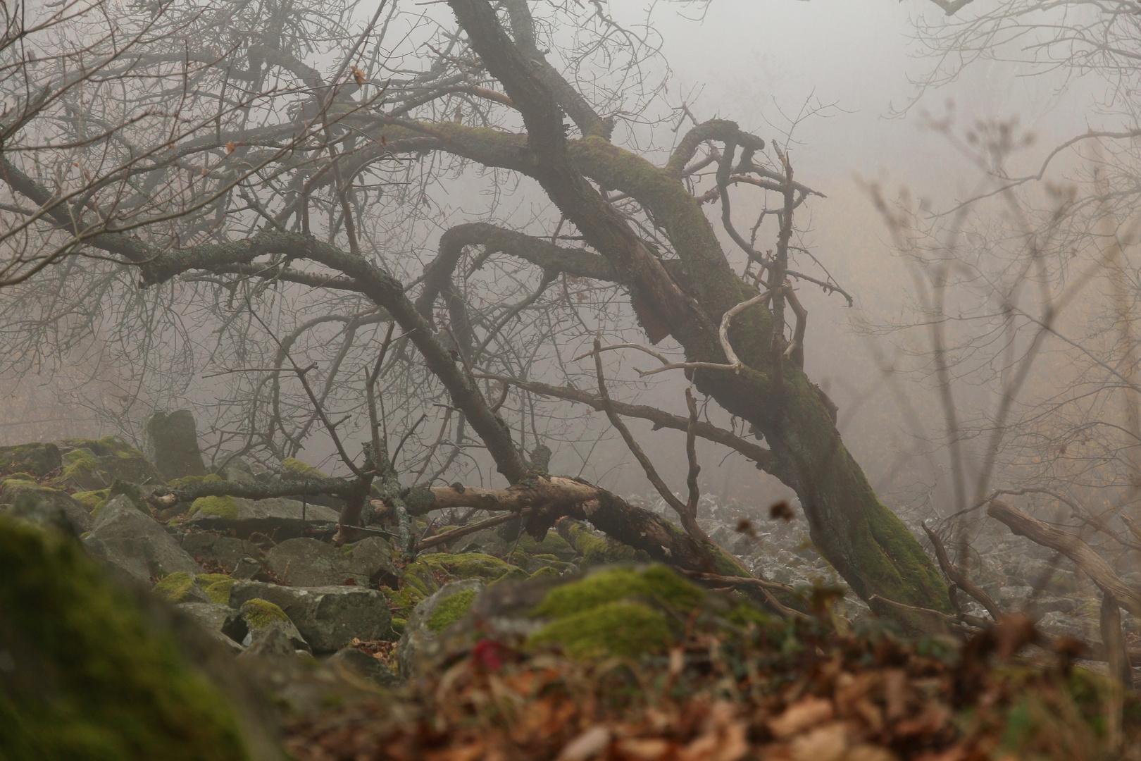 herbstliche Rhön: Nebel u. leuchtende Farben