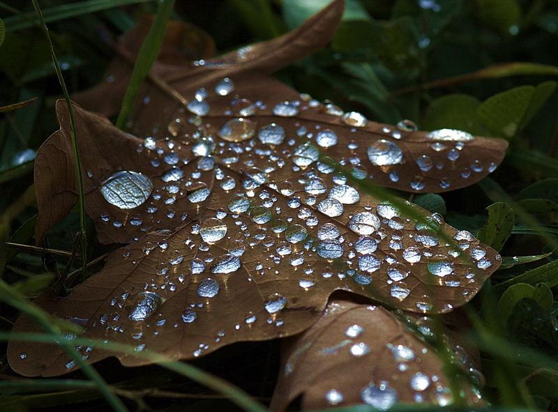 Herbstliche Spiegelungen