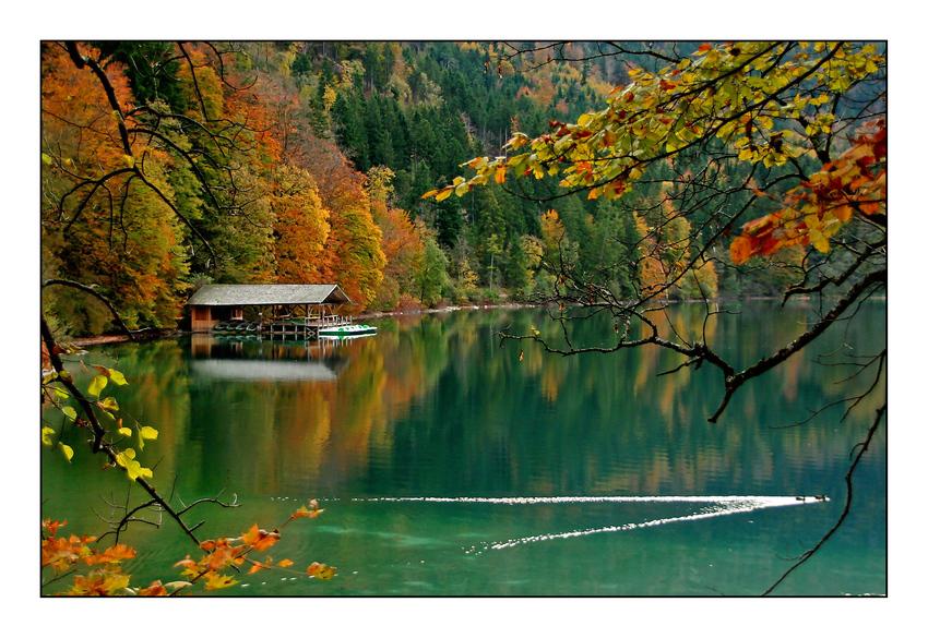 Herbstliche Stimmung am Alpsee Foto & Bild   deutschland ...