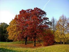 Herbstliche Veränderungen