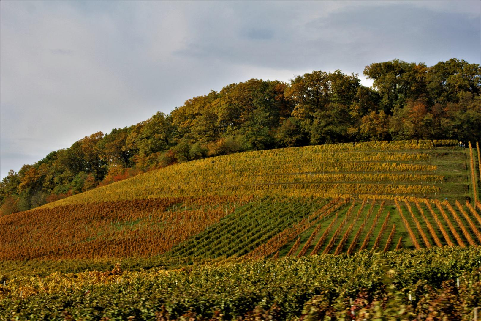 Herbstliche Weinberge nahe Heilbronn