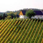 Herbstliche Weinstrasse