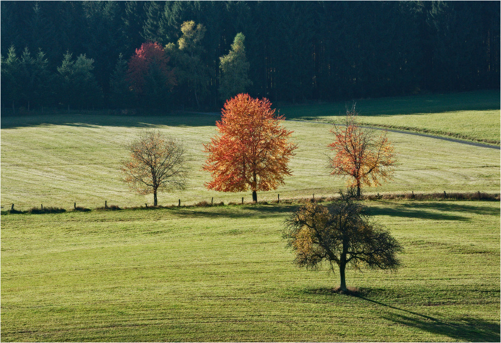 Herbstliche Wiesen