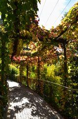 Herbstlicher Ausblick - Nr. 6