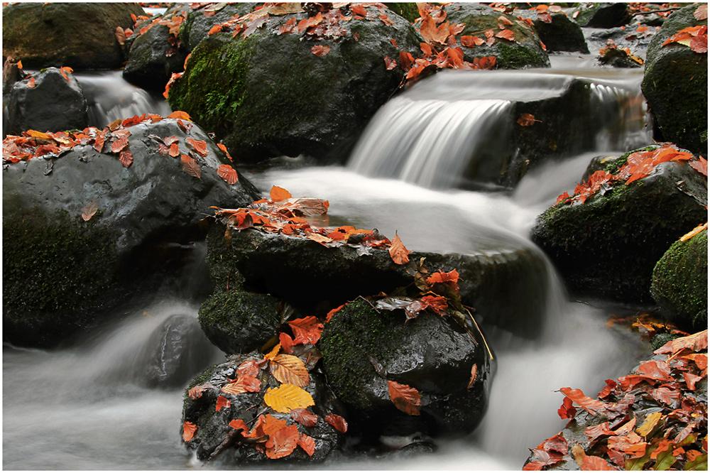 Herbstlicher Bachlauf