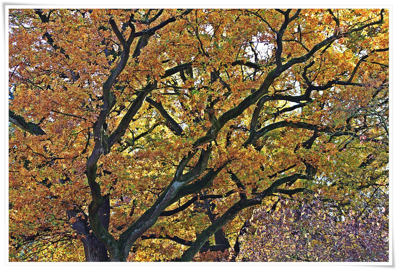 Herbstlicher Baum