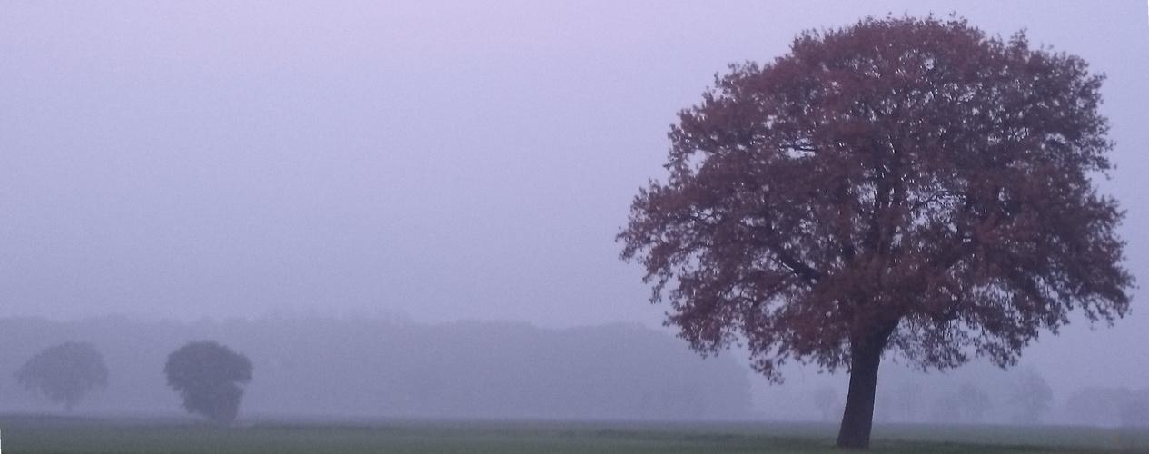 Herbstlicher Baum ...