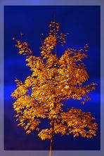 Herbstlicher Baum zur Blauen Stunde