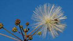 Herbstlicher Bienenflug