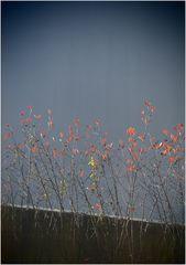 Herbstlicher Blick