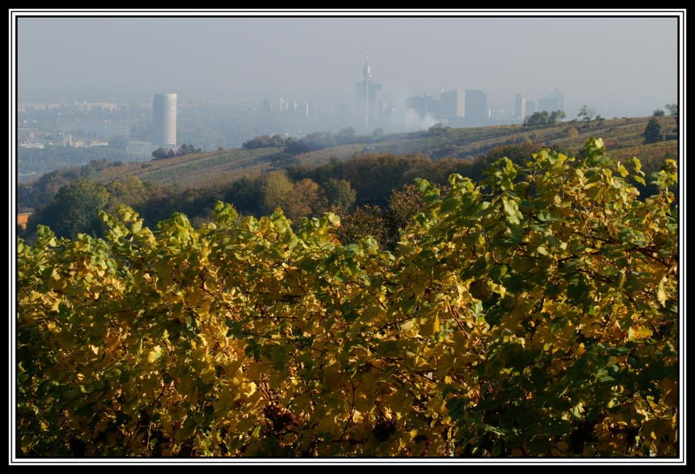Herbstlicher Blick auf Wien