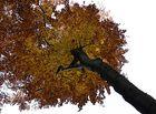 Herbstlicher Blick nach oben
