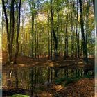 Herbstlicher Buchenwald (Hullerbusch bei Feldberg)