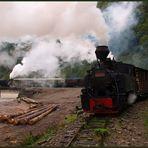Herbstlicher Dampfbetrieb im Valea Vaserului - II