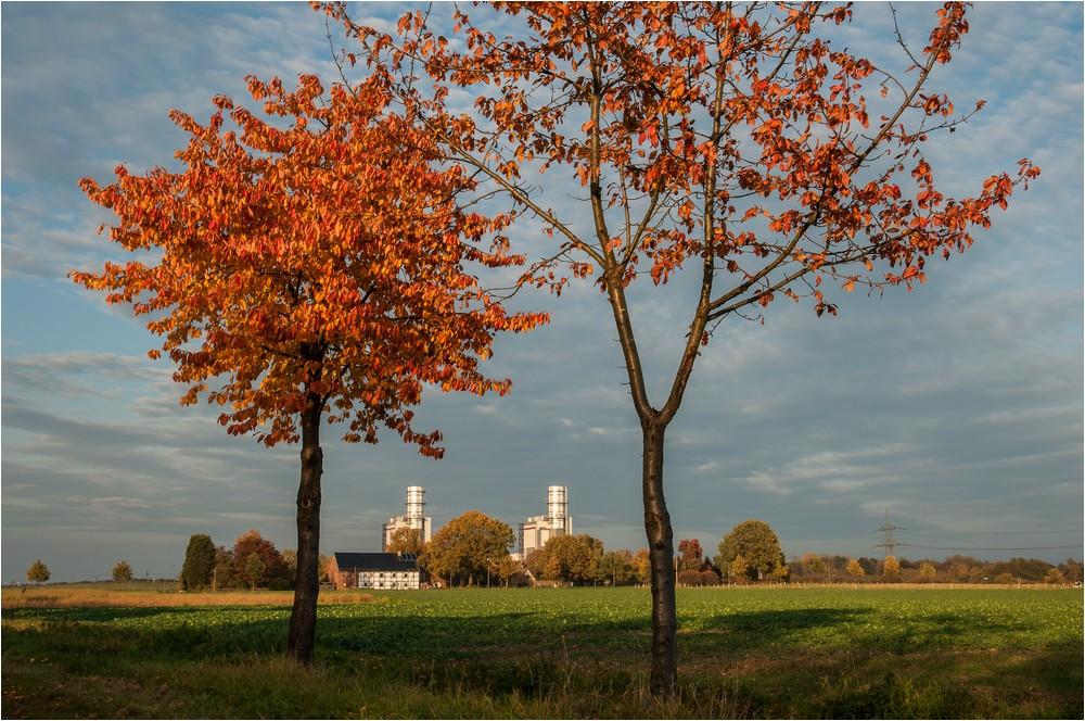 Herbstlicher Durchblick ...