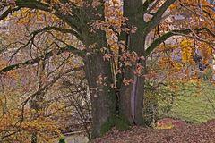 Herbstlicher Eichenbaum