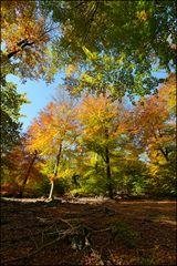 [ Herbstlicher Farb-Flash ]