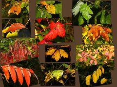 Herbstlicher Farbenrausch
