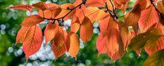 Herbstlicher GUTENMORGENGRUSS