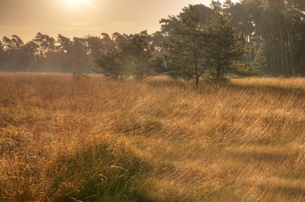 Herbstlicher Morgen am Niederrhein