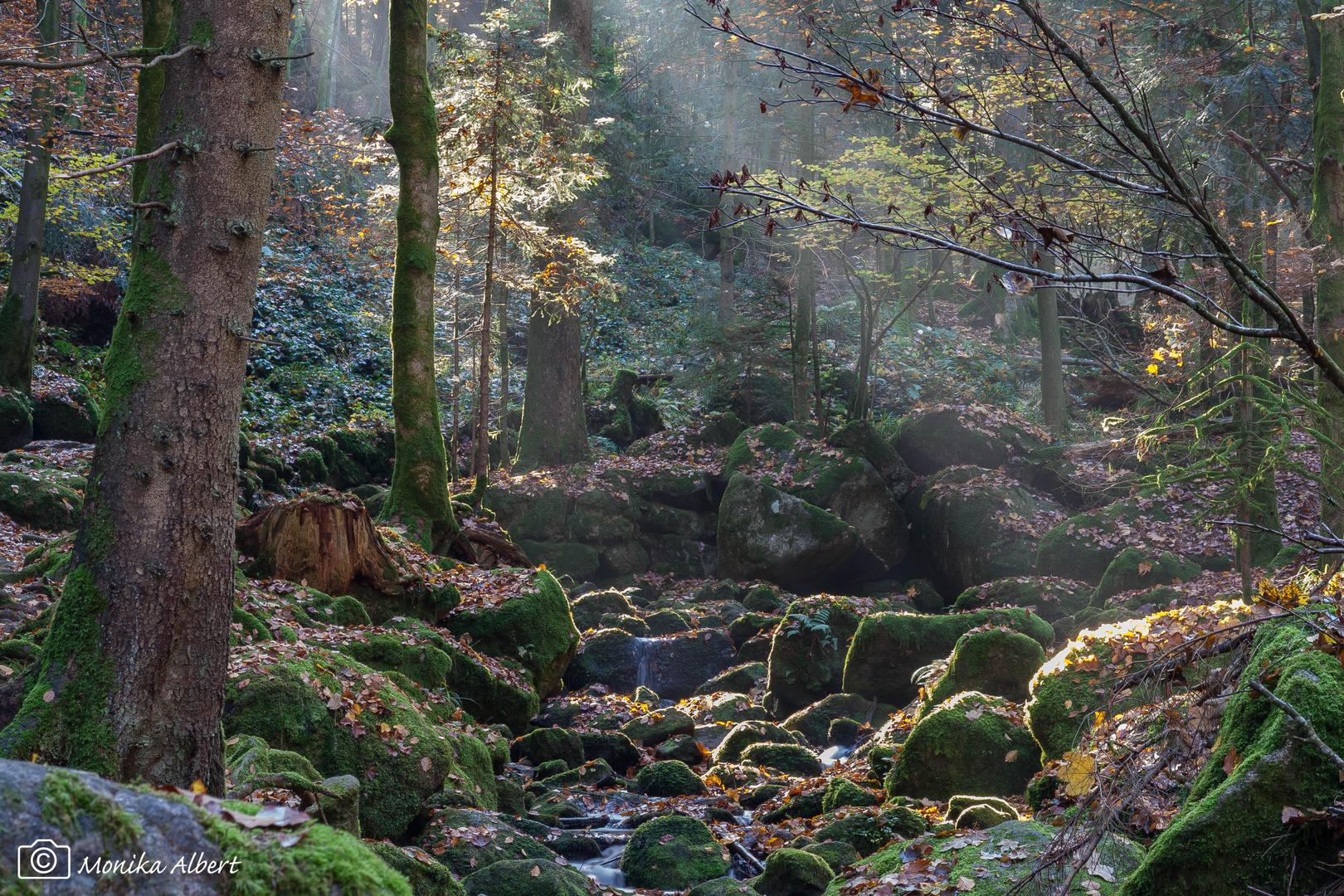 Herbstlicher Morgennebel am Gertelbach