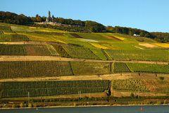 Herbstlicher Rheingau