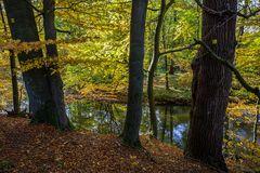 Herbstlicher Sachsenwald an der Bille