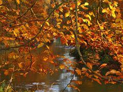 Herbstlicher Schleier