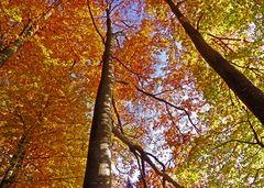 Herbstlicher Sihlwald